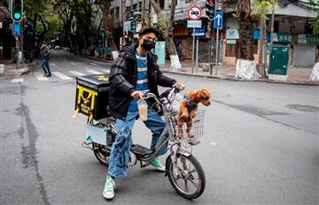 China: Mascotas son abandonadas por coronavirus