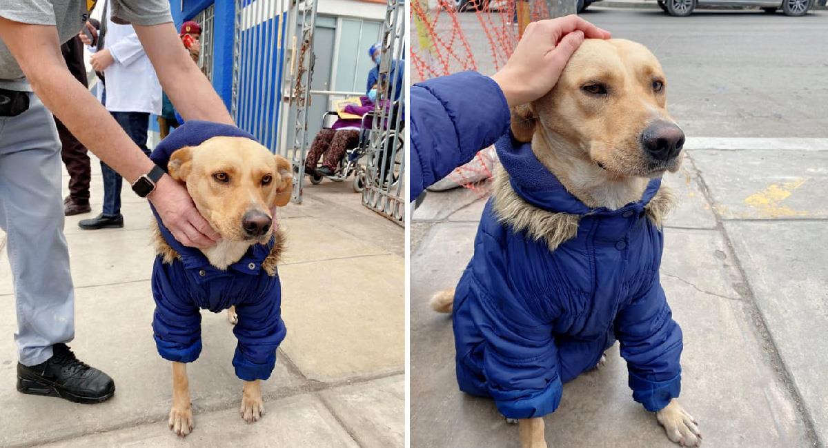 Perrito espera a su dueño internado por Covid-19 en la puerta de un hospital