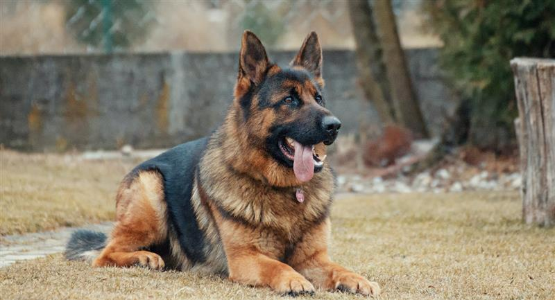 Muere el primer perro diagnosticado con COVID-19 en EEUU. Foto: Pexels