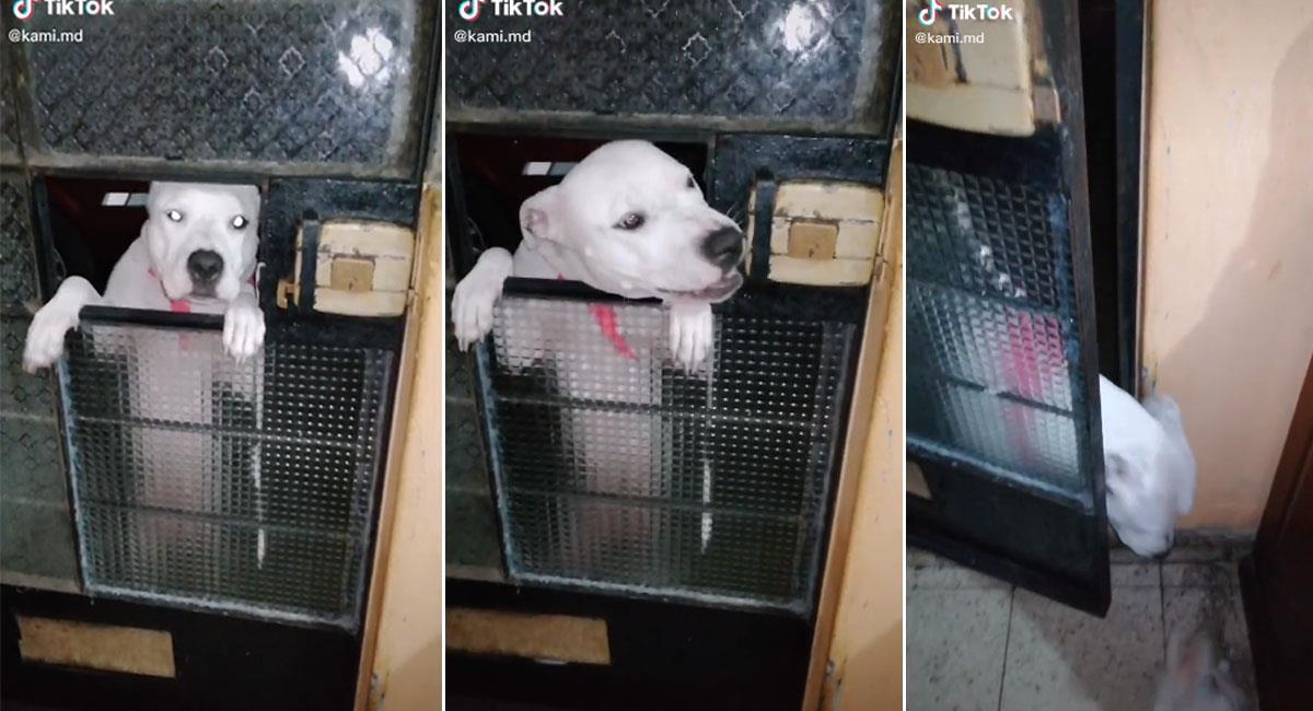 Perrito invita a sus amigos a su casa y se vuelve viral en Tik Tok