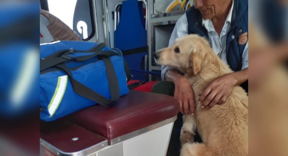 Abuelito se desmaya en la vía pública y su perro no lo abandona
