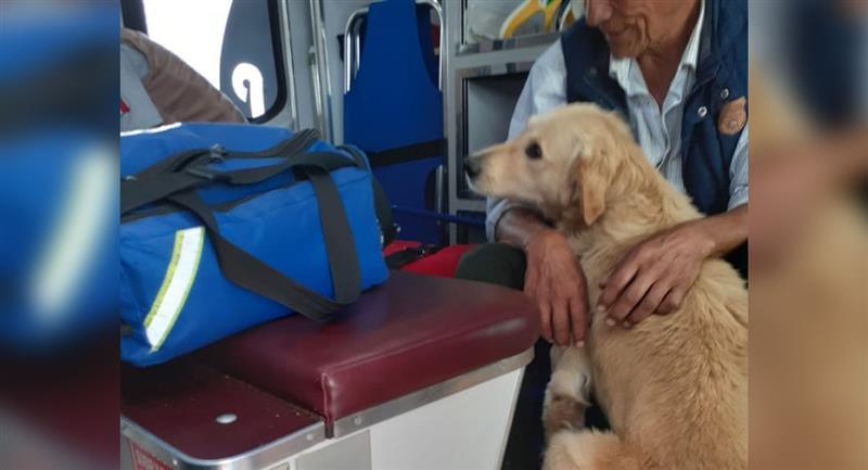 Perrito no abandona a su dueño tras sufrir un desmayo. Foto: Facebook
