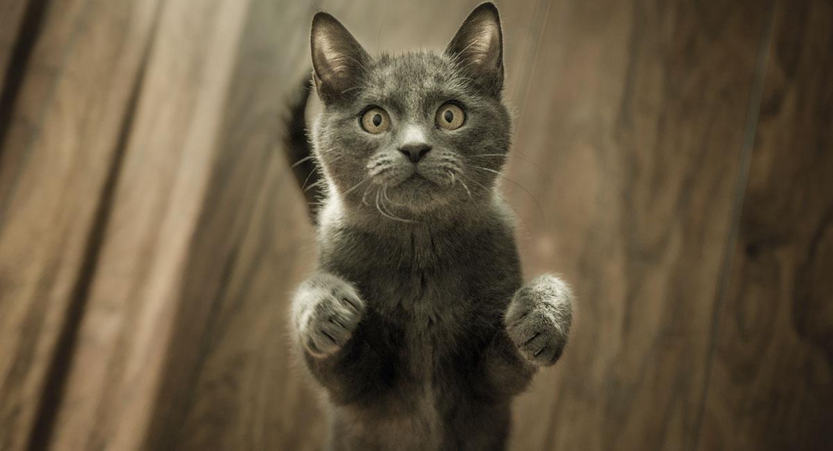 Gatito se va de casa y regresa con deuda por comer pescado. Foto: Pexels