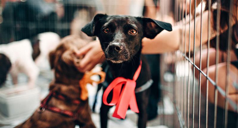 Mira la iniciativa del Metro de CDMX para ayudar a perritos rescatados. Foto: Pexels