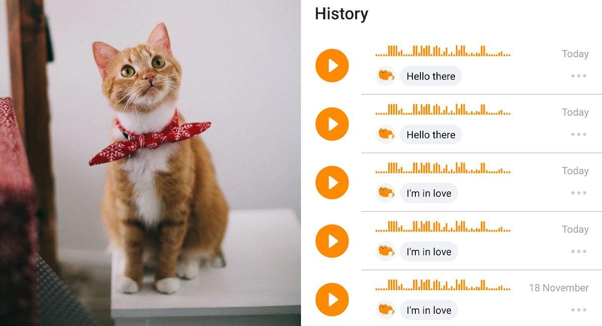 MeowTalk: Crean aplicación que traduce los maullidos de tu gato. Foto: MeowTalk