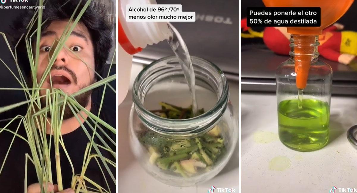 Peruano fabrica perfume con hierba luisa y se vuelve viral en Tik Tok