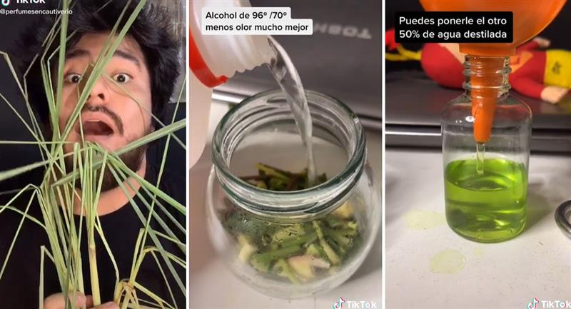 Peruano enseña a hacer perfumes con hierba luisa en Tik Tok. Foto: TikTok @danieltodista