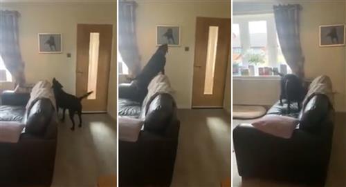 Perrito reacciona al ver el trato de su hermano fallecido y su reacción se vuelve viral