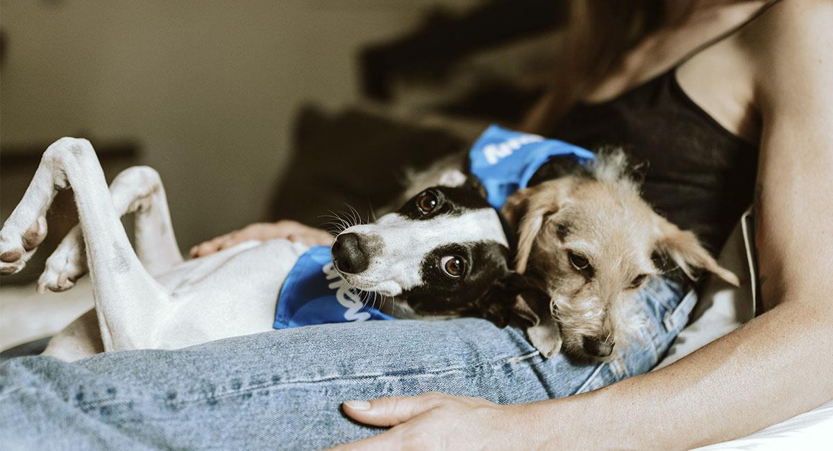 Las mujeres duermen mejor con sus perritos que con sus novios, según estudio. Foto: Unsplash