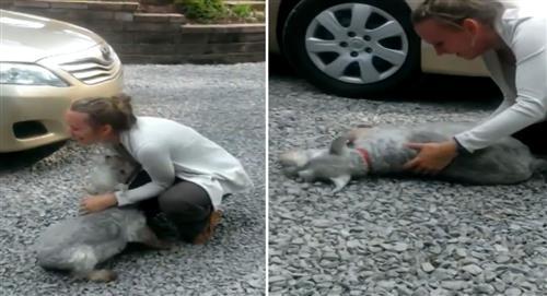 VIDEO: Mira la tierna reacción de esta perrita al ver a su dueña después de dos años