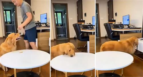 VIDEO: Hombre retó a su perro a no comer una golosina, pero este lo engaña