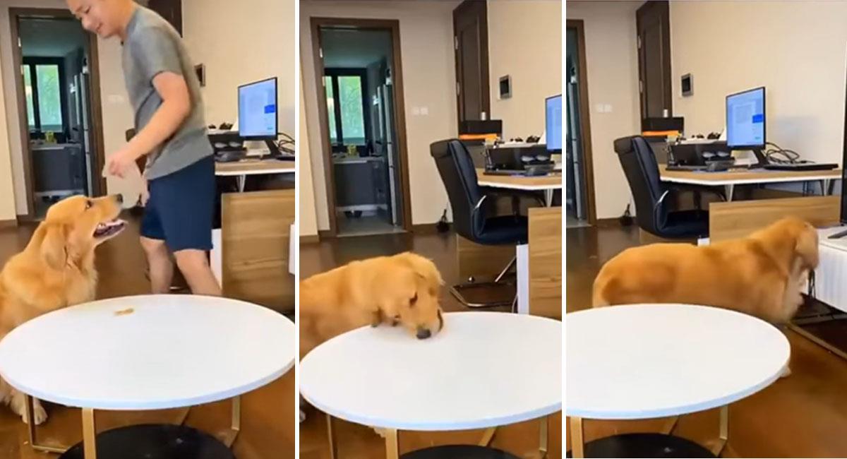 Perrito engaña a su dueño al ser retado a no comerse una golosina. Foto: Youtube