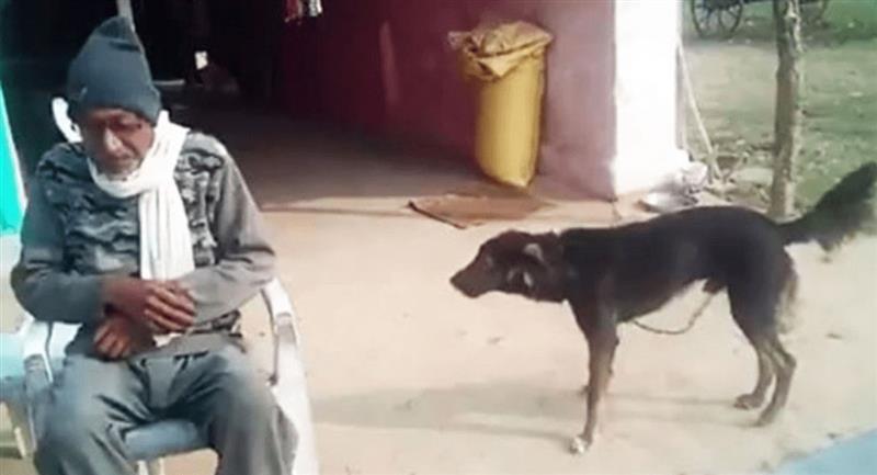 Anciano se enoja con sus hijos y le deja herencia a su perro Jack. Foto: Nai Dunia