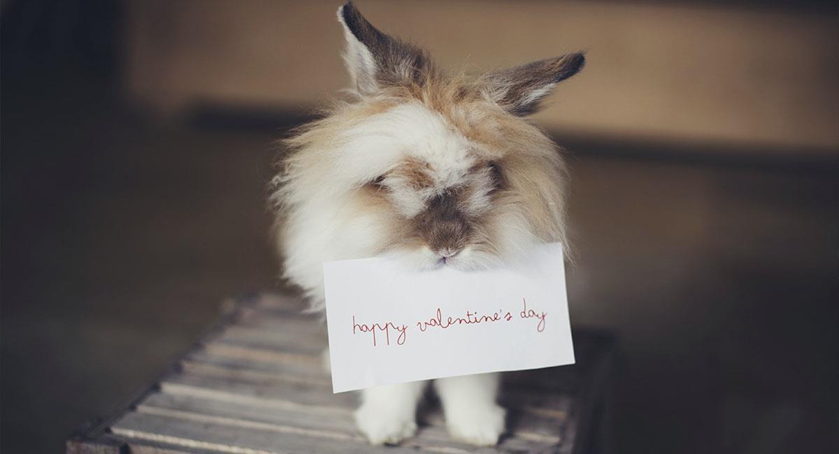 5 puntos a tener en cuenta para compras online por San Valentín. Foto: Unsplash