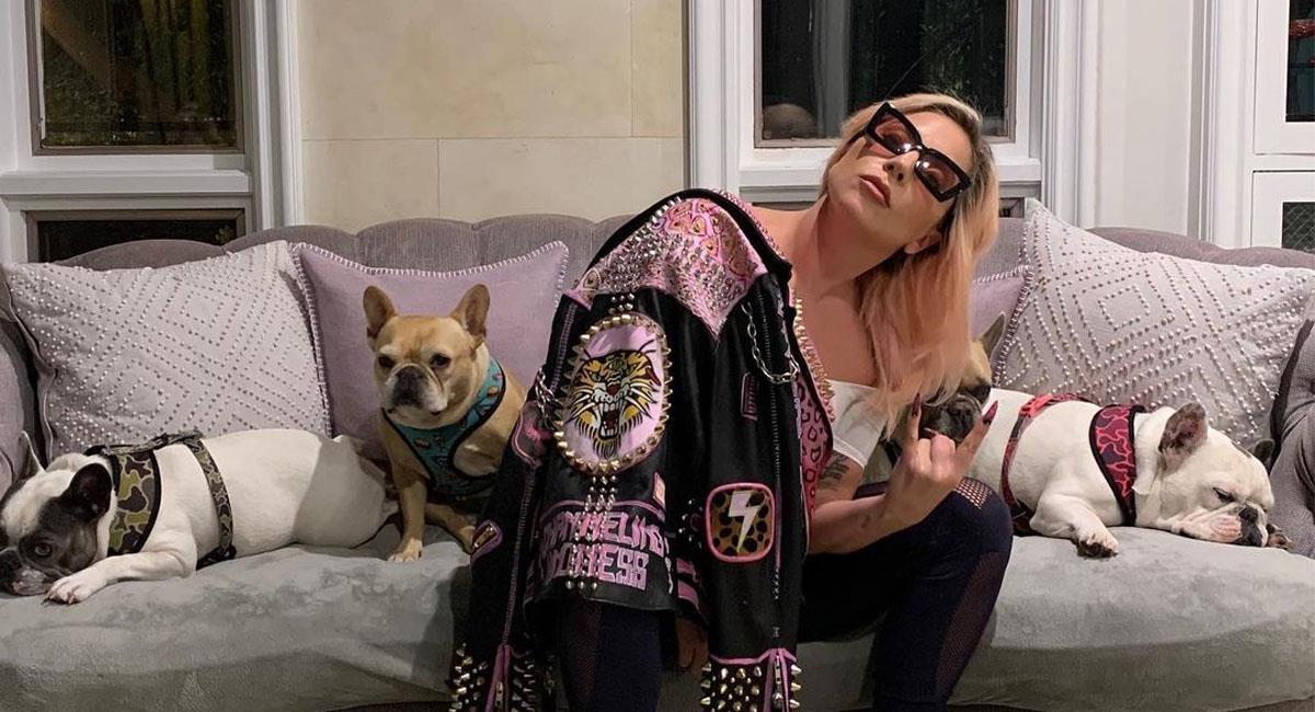 Lady Gaga ofrece jugosa recompensa a quien le devuelva a sus perritos. Foto: Instagram @ladygaga