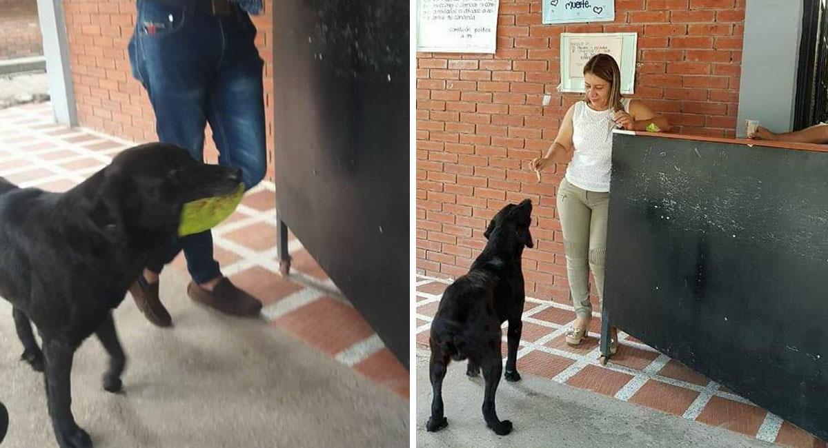 Perrito inteligente pide golosinas, pero paga por ellos, ¿cómo?. Foto: Facebook
