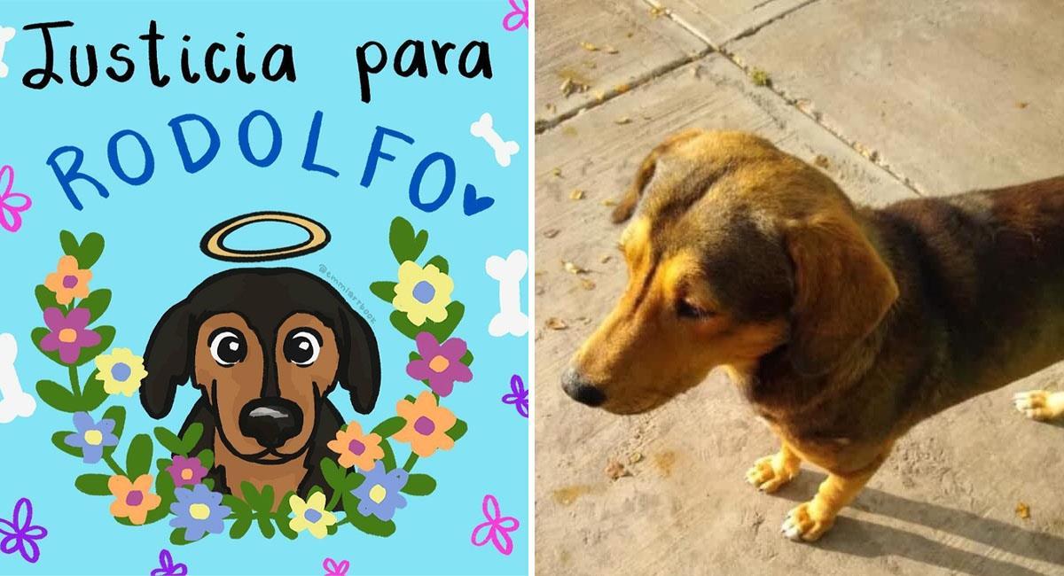 #JusticiaParaRodolfo: Hombre mata a perrito callejero a machetazos. Foto: Twitter @ArrazolaThaly y @luzdenissev